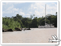 Video Outremer 49 with elephants in Borneo