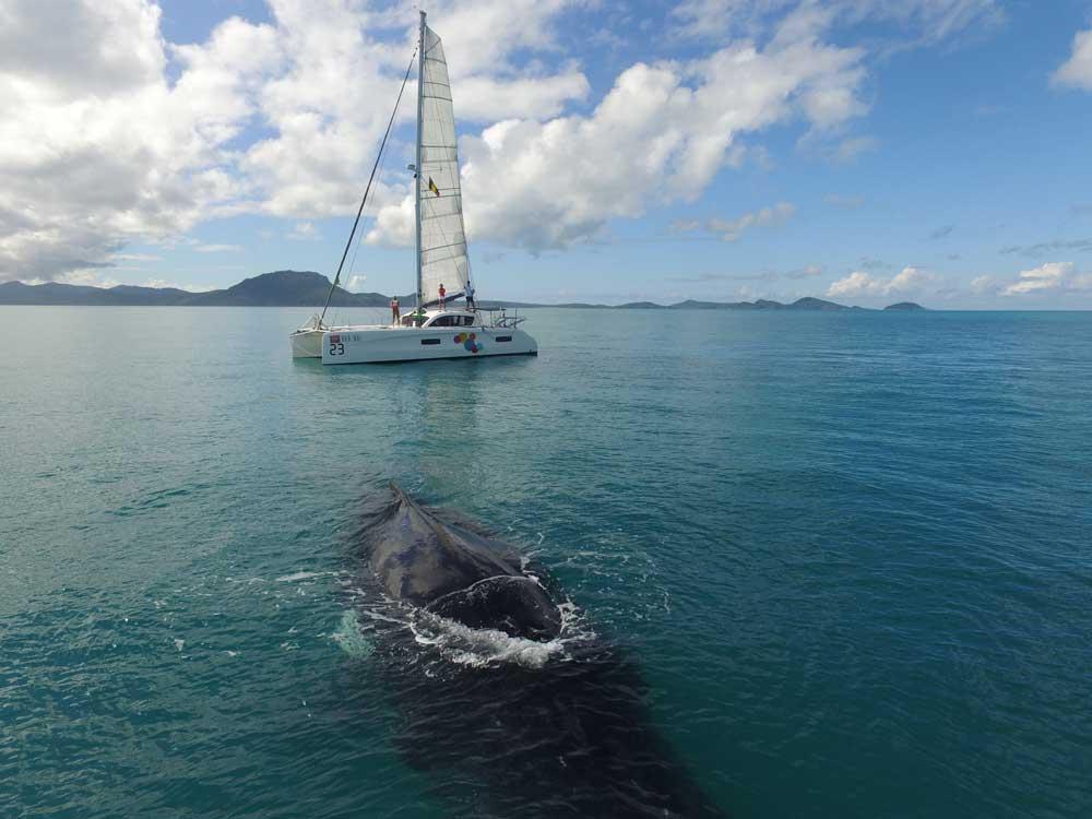 Wal taucht auf vor Outremer 45 Katamaran